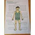 Science learning about the body