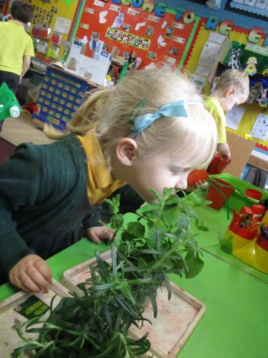We used our senses to explore other plants
