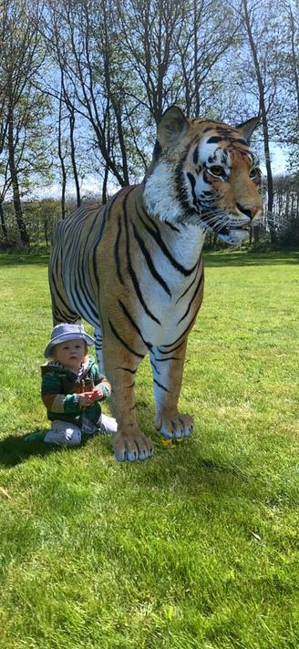 Miss B-H's baby Austin & a tiger in their garden!