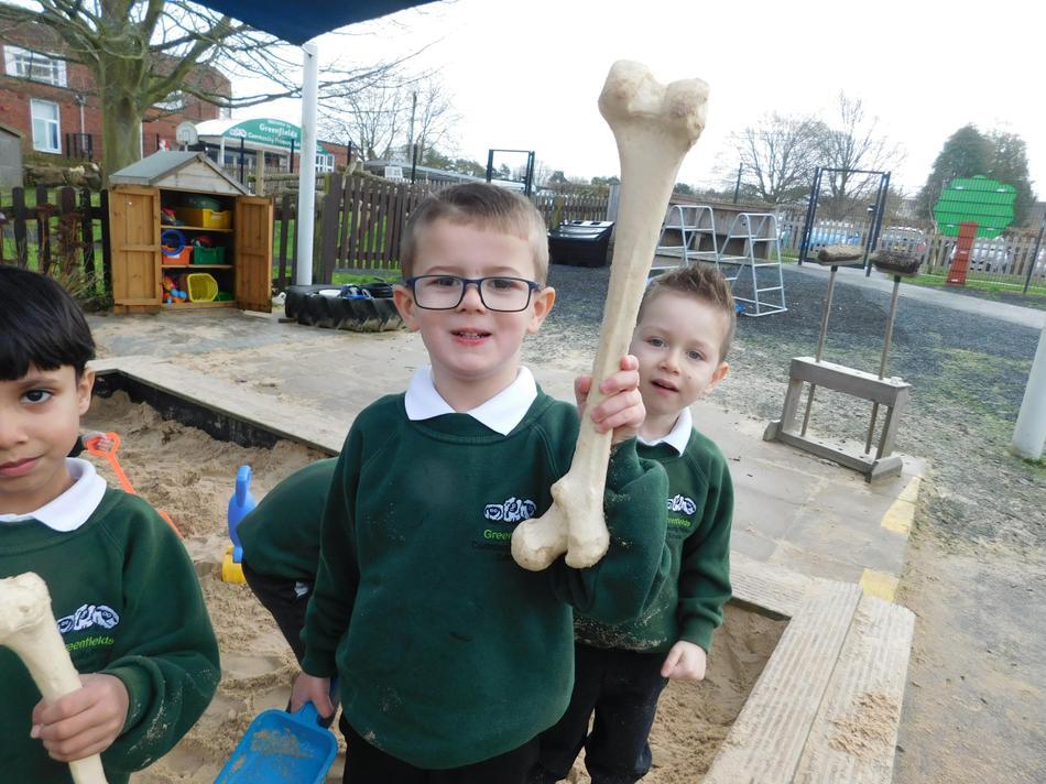 Reggie found a Apatosaurus neck bone.