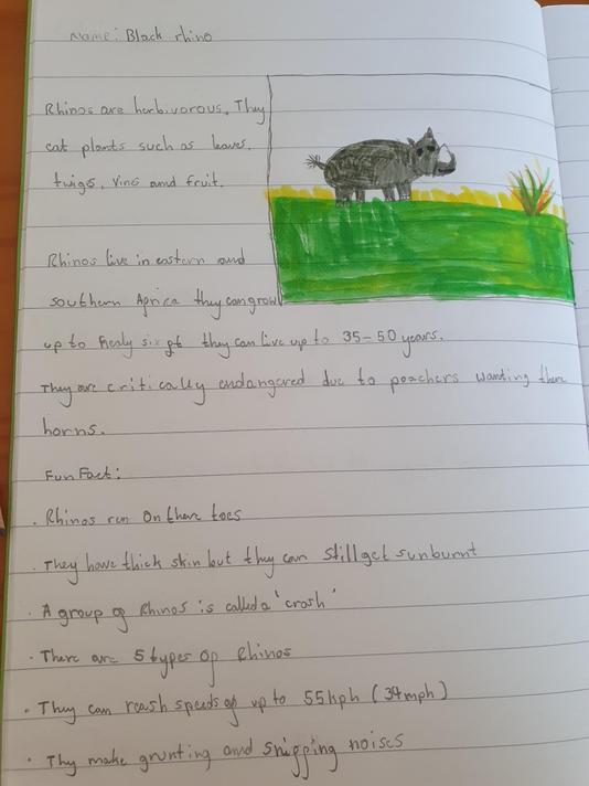 Oliver created a brilliant factfile on rhinos!