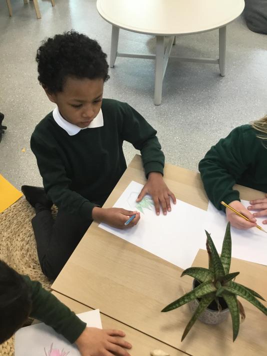 We drew drawings of plants.
