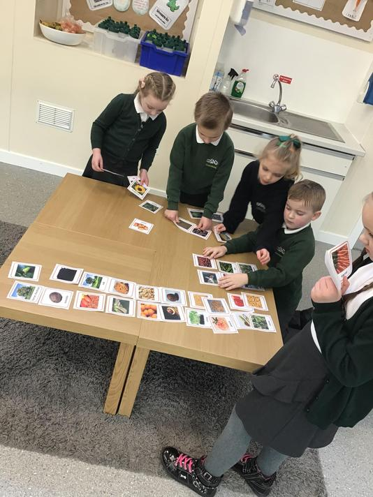 Matching seeds to plant