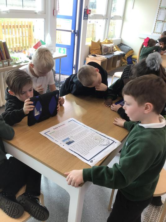 Finding out information about Polar Bears