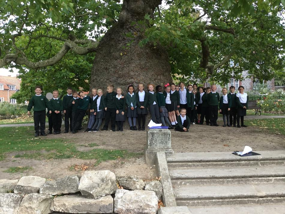 We have not shrunk...this is a really big tree!