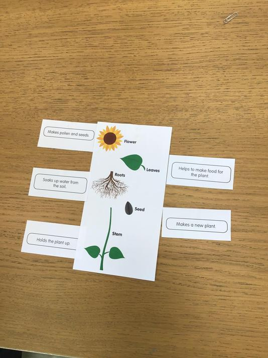 Matching parts of plants to their function