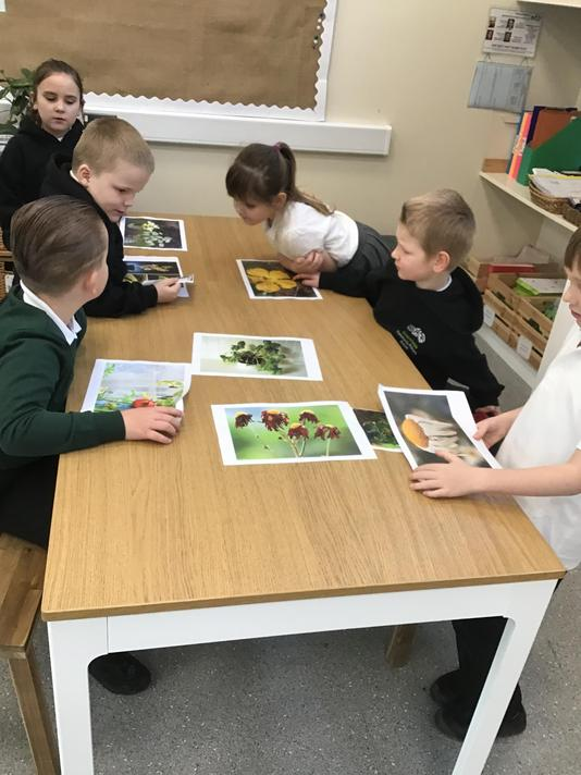 Discussing how to make plants healthy