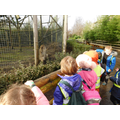 More photos from our trip to Wingham wildlife park