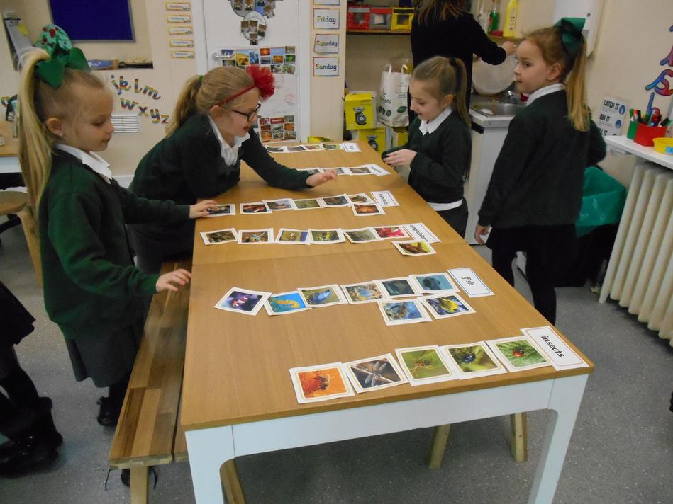 The children learned that scientist group animals under six categories.