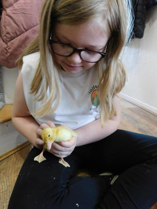 Mrs Swifts daughter Ruby is loving being on duckling watch this weekend