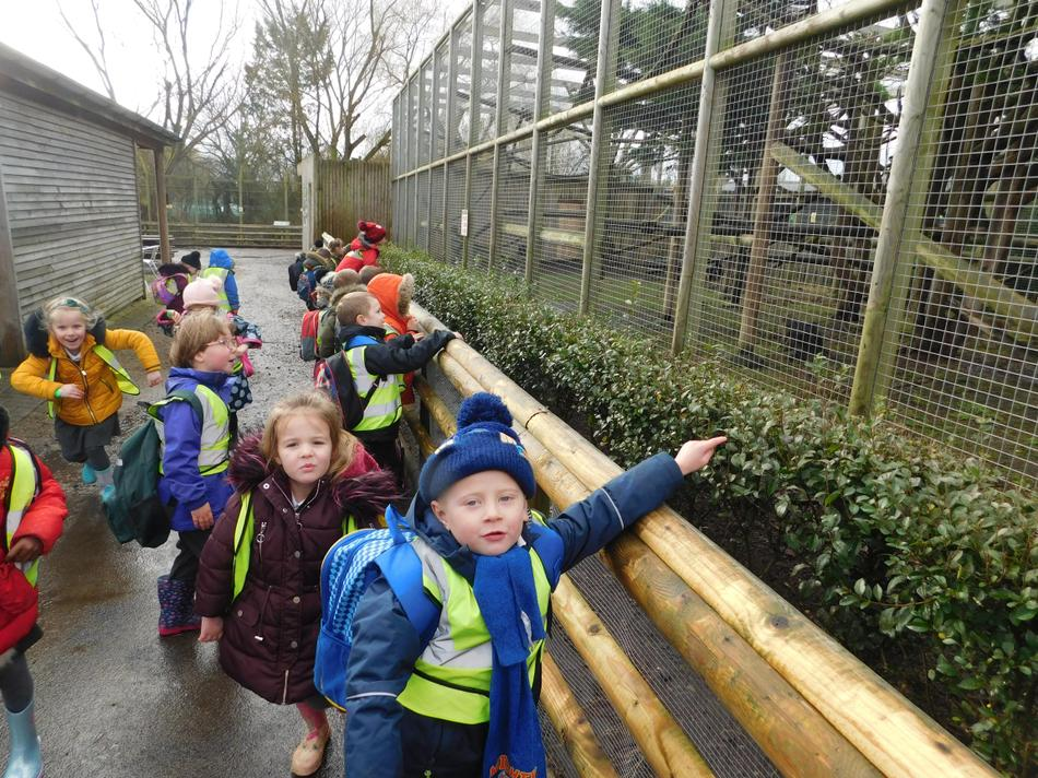 Wingham wildlife park!
