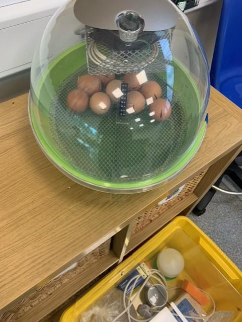 Monday: 10 eggs in the incubator!