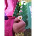 Natalia has found a daisy,