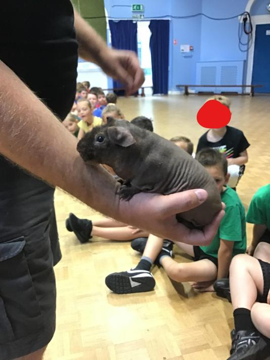 And here is his friend, the skinny pig!