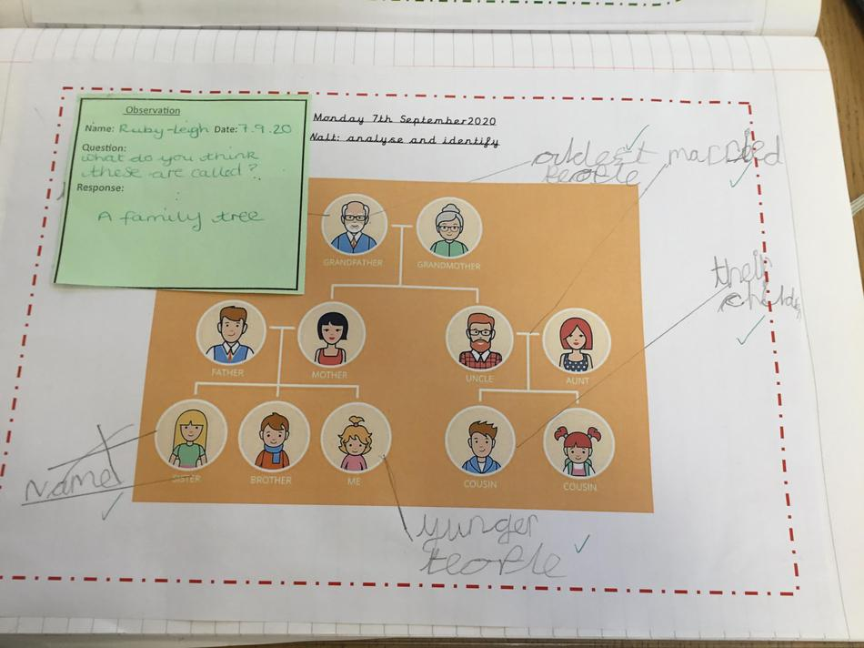 Children have explored family trees to become familiar with the features and layout.