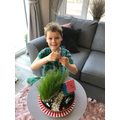 George's grass has now grown 29cm tall!!!