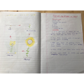 Poppy has been busy with science and english.
