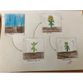 George sequenced the life cycle of a sunflower.