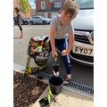 Harrison has repotted his 22cm sunflower.
