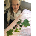 Lucy collected leaves.