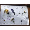 Grace's garden plants.