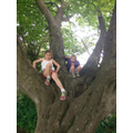 Climbing trees with Luciana