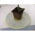 Alex's plant is growing nicely.
