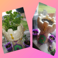 Addison's plants have grown lots!