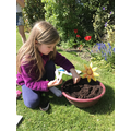 Poppy has been planting seeds in the sun.