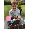 George made a bird garden with grass seed.