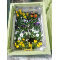 Addison has planted flowers in her planters.