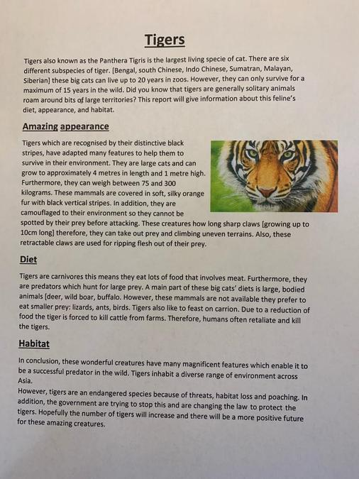 Will's tiger report.