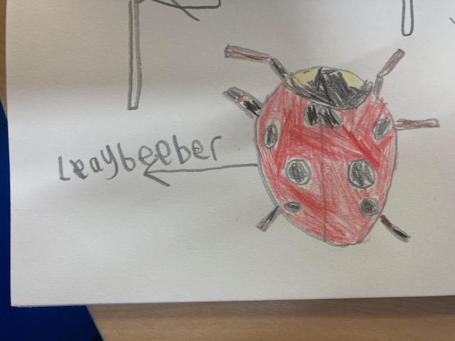 Max worked so hard on his British wildlife animal drawing