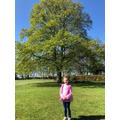 Lucy's Autumn tree.