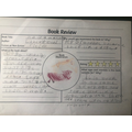 Lucy's book review for Hairy Maclary.