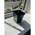 Harrison's sunflower has grown 14cm!