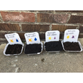Wk 3 Seed investigation growth after 2 weeks.