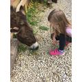 Poppy met this beautiful donkey.