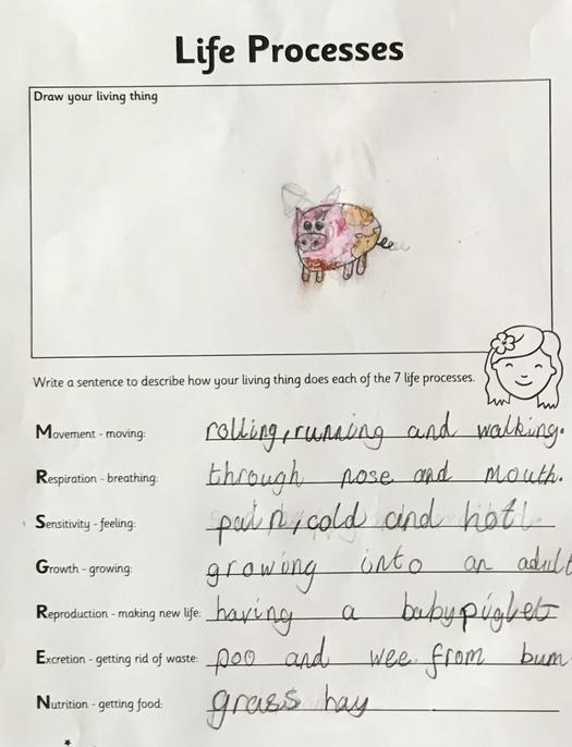 All 7 identified. Your pig looks muddy! Well done Sidharth.
