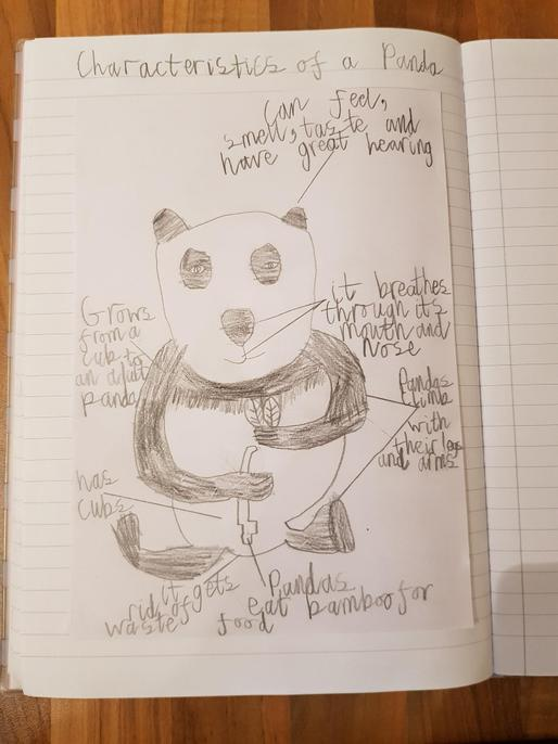 All 7 identified on such a happy panda. Well done Annabelle.