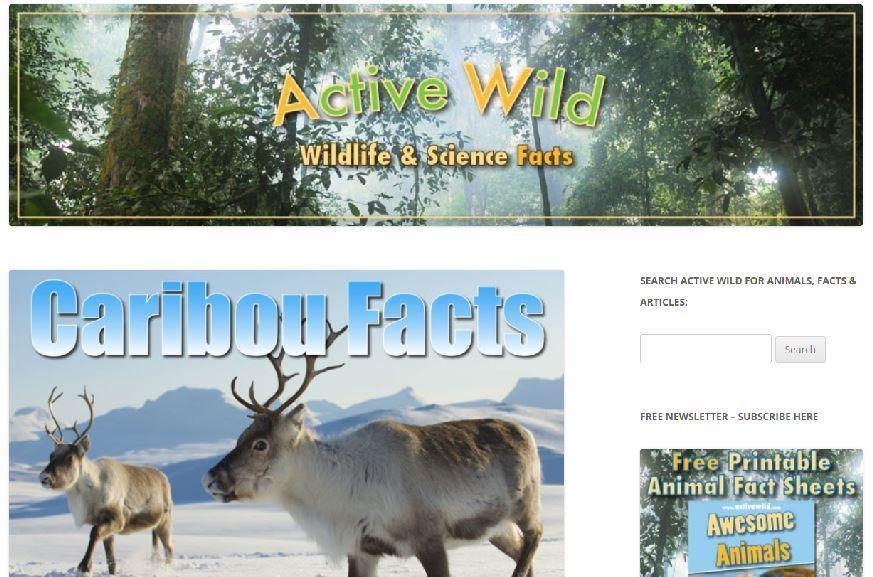 Active Wild - Caribou facts