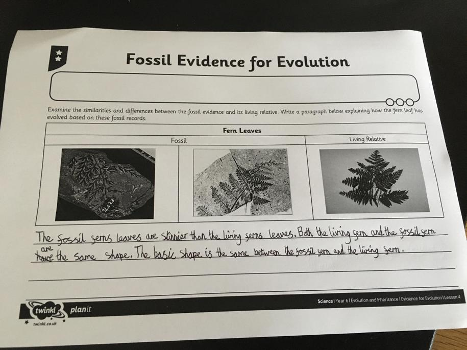 Good fossil findings work. You have looked at these with an investigative eye. Well done