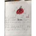 Ladybird writing!