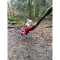 Climbing trees to develop our gross motor skills