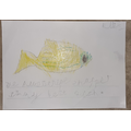 Writing about favourite fish