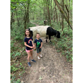 Finding a cow on the walk!