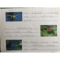 Lovely frog writing!