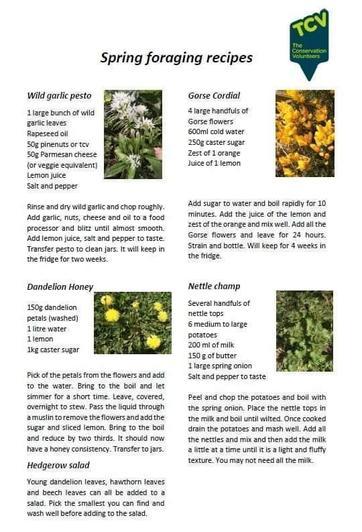 Dandelion honey recipe (12)
