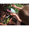 Watering the garden!