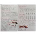 Harrison's Amazing Ant Facts
